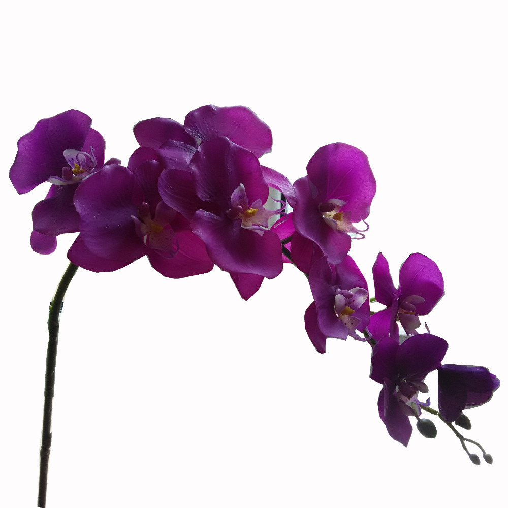 12pcslot new real touch glue pu phalaenopsis butterfly orchid dark 12pcslot new real touch glue pu phalaenopsis butterfly orchid dark purple eggplant artificial flowers decoration accessories in artificial dried flowers mightylinksfo