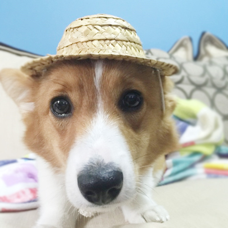 Pet Dog Cat Fashion Cool Straw Hat Doggy Sun Hats Grooming