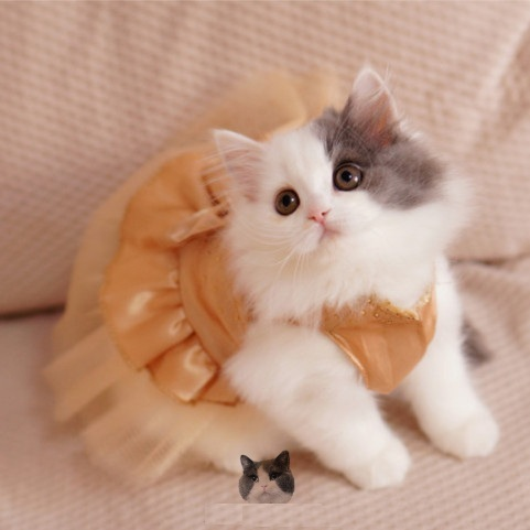 Hot Ing Bling Cat Wedding Dress Dog Tutu Party Pet Clothes For