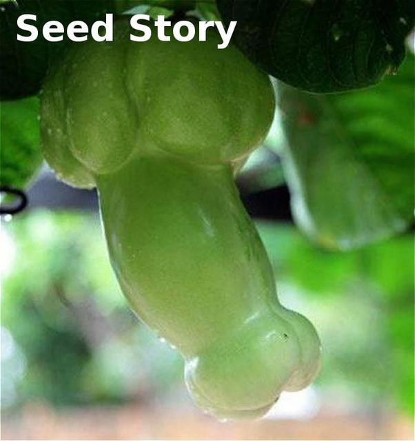 Magic Pumpkin bonsai 30Pcs Chinese Rare Big Penis Melon Plants Vegetables planting For Home & Garden