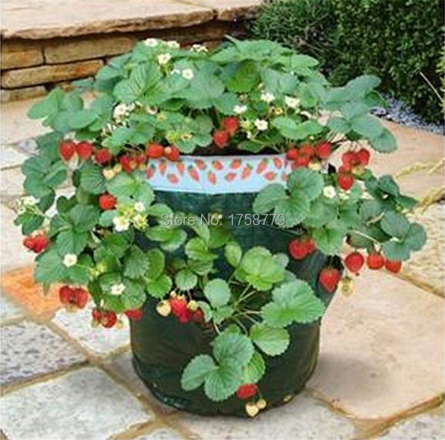 Free Shipping 3 / LOTE New Organic Vegetable Planting Strawberries PE Bags  House Pots Garden Planting