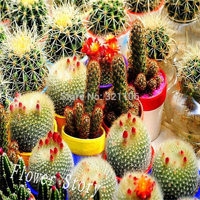 achetez en gros mini cactus en ligne des grossistes mini cactus chinois. Black Bedroom Furniture Sets. Home Design Ideas