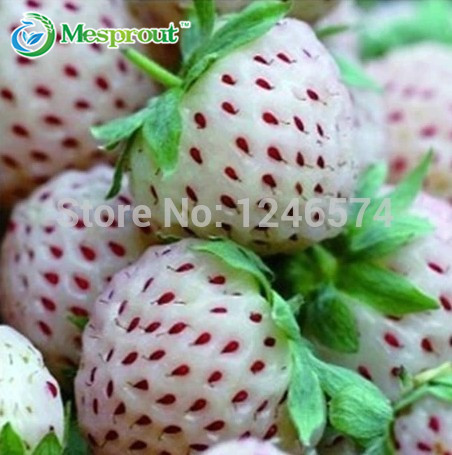 The Rare White Strawberry Bonsai Potted Four Seasons Sowing 50 Packaging Free Shipping