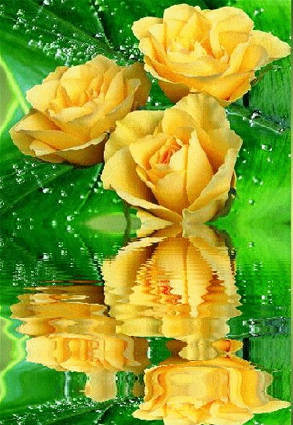 значения этого анимации желтая роза в картинках весёлые
