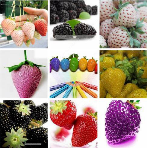 Promotion!300 pcs Japanese Strawberry Berry Sweet Fruit Indoor Outdoor Plant Bonsai Home Garden Multi-Color To Choose