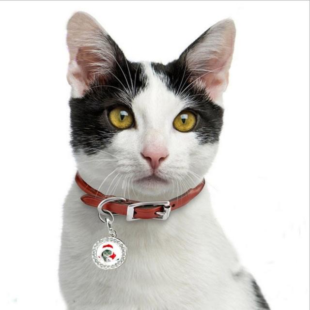 Pet  Rhinestone ID Tag