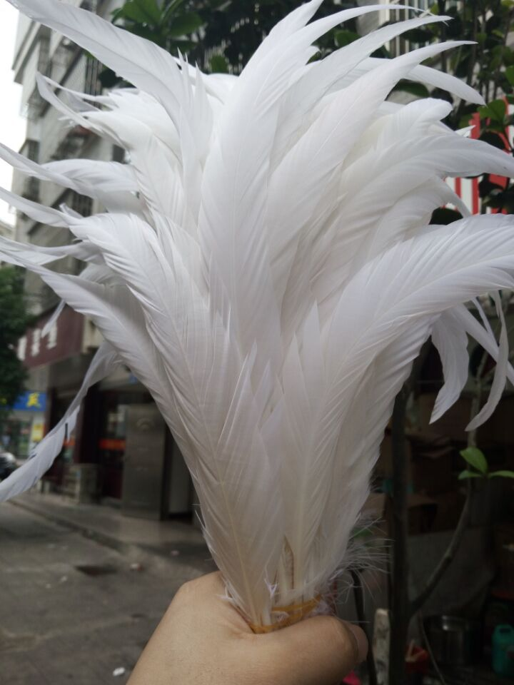 Free shipping wholesale 50pcs Rare natural rooster tail 35 40cm 14 16inch Decorative diy pure white