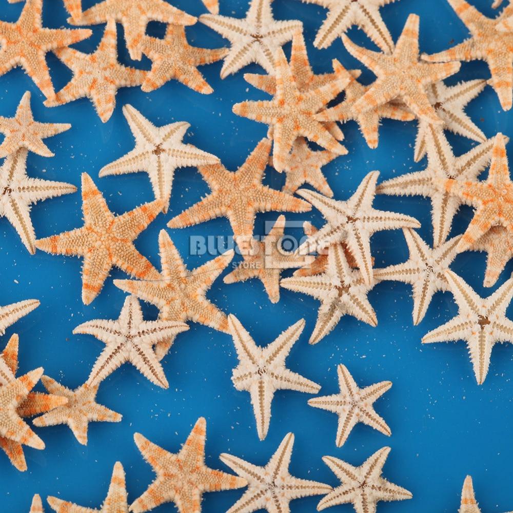 100x Mini Natural Flat Tan Starfish Seashells for Beach Party Micro Landscape