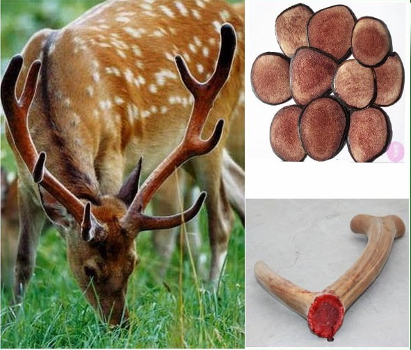 High quality 1KG (35.27oz) watersoluble 20:1  deer antler velvet extract powder GMP Factory free shipping gmp factory supply deer antler velvet extract powder 10 1