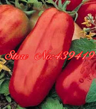 200/ bag giant big Tomato Seeds -San Marzano tomato, Heirloom Open Pollinated vegetable seeds, superior taste, for home planting