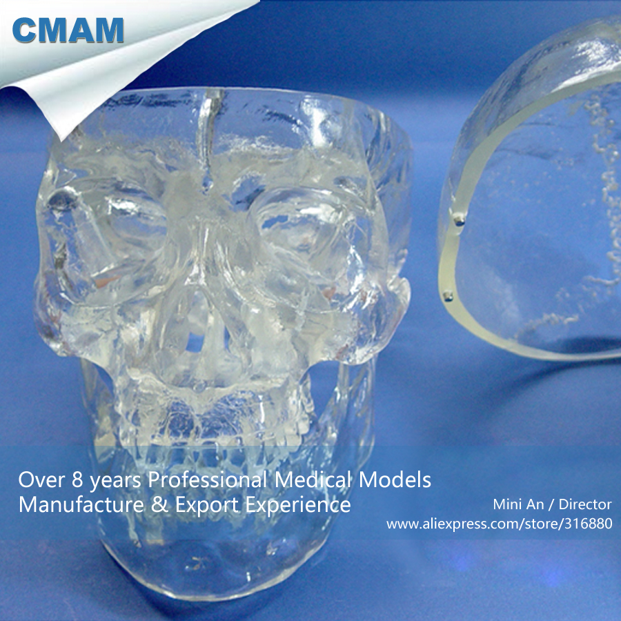12335 CMAM-SKULL09 Transparent X-Ray Humans Skull Model ,Medical Science Educational Teaching Anatomical Models dh307 age 7 transparent mixed caries model medical science educational teaching anatomical models