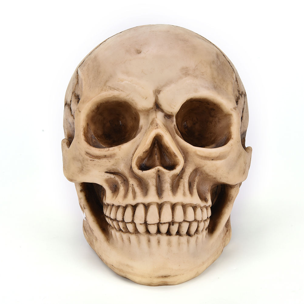 Halloween skull decorations - 1pcs 1 1 Halloween Home Decoration Decorative Craft Resin Human Skull Replica Medical Model Lifesize