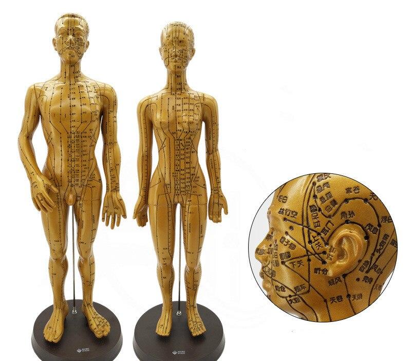 1 Pc Akupunktur Modell 50 Cm/48 Cm Männlich Weiblich Mit Basis Menschliches Akupunktur Punkt Meridiane Modell Medizinische Akupunktur Starter Kit