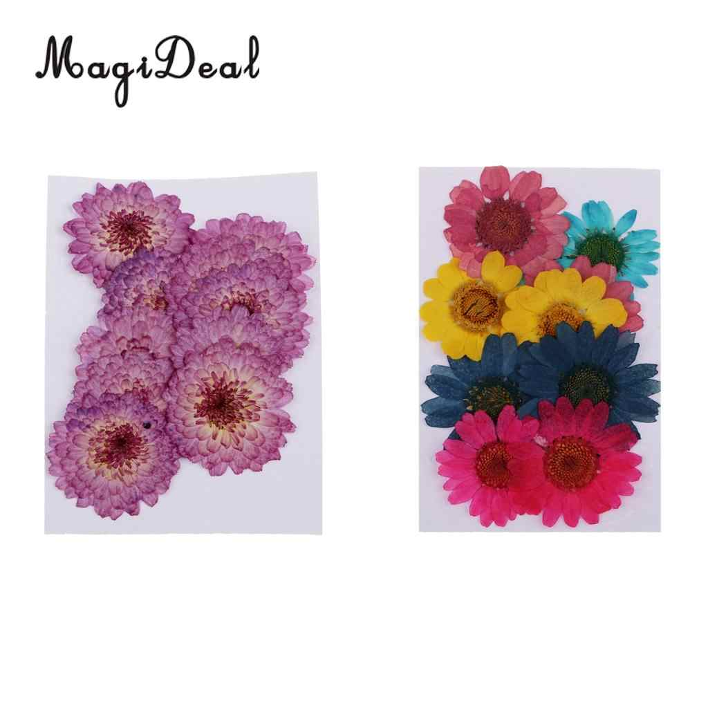 pink chrysanthemum 20pcs for floral art Pressed flowers craft card making scrapbooking