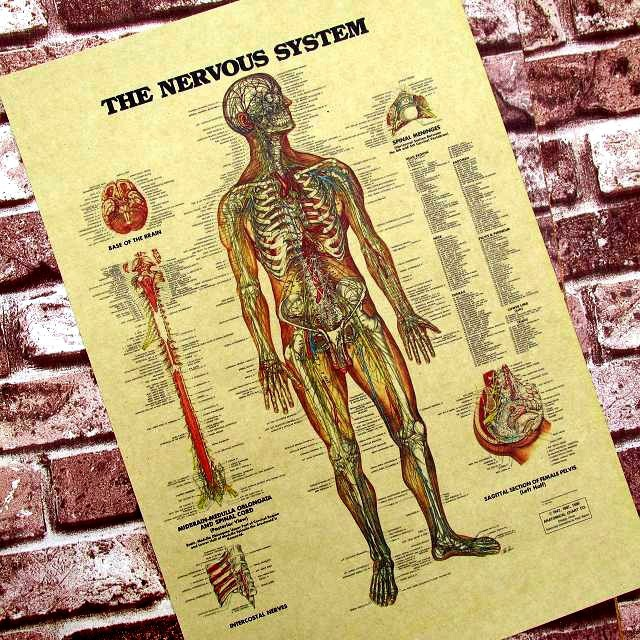 Wall Sticker posters for walls Human Neural Figure In