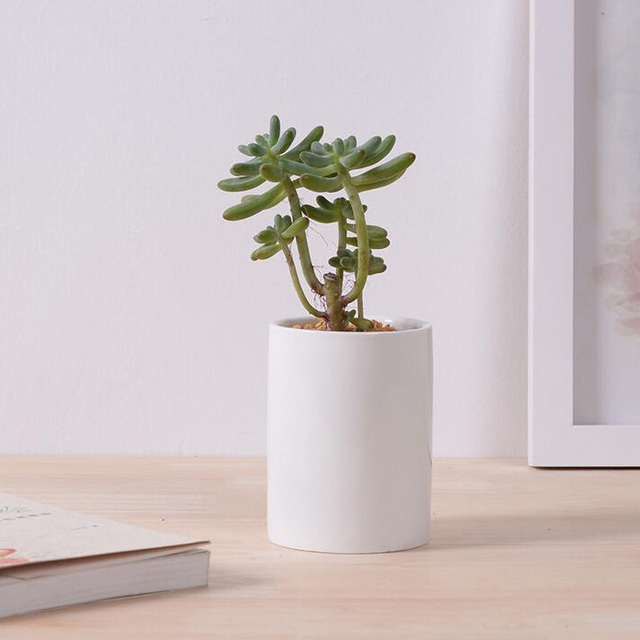 Creative Simple White Small Succulent Pot Ceramic Desktop Cylindrical Z Decorative Flower Indoor Bonsai