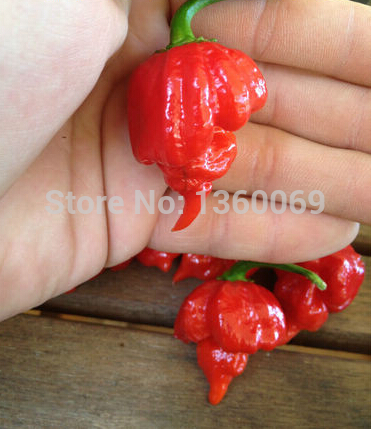Bonsai 50pcs Worlds Hottest Trinidad Scorpion Pepper Diy Home Garden Free Shipping D31 Carefully Selected Materials