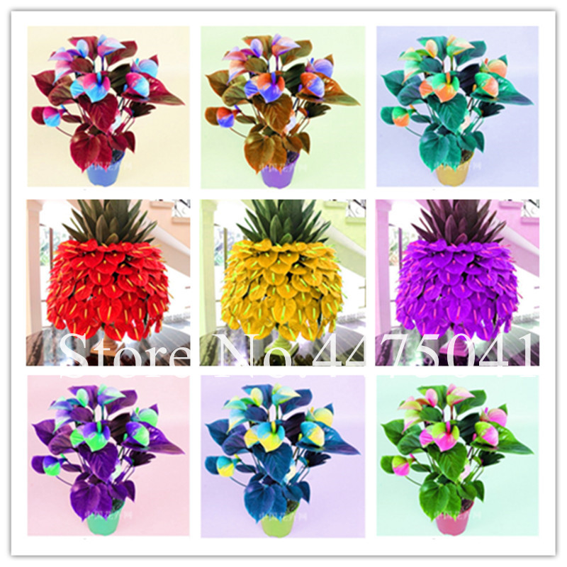 best plants for balcony US 014 78 OFF Best Selling 100 Pcs Flower Plants Anthurium Andraeanu Bonsai Balcony Potted Diy Plant Colorful Anthurium Bonsai For Home Garden On