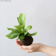 Мох шар мох бонсай персонализированный цветочный горшок Птичье гнездо цветочное растение стол Сад DIY Украшение плантационный горшок