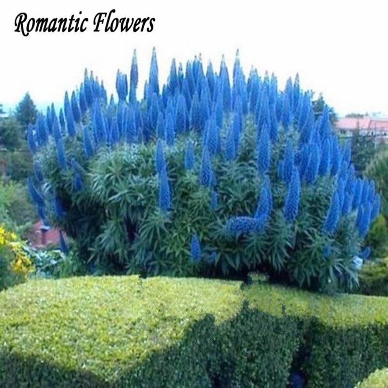 achetez en gros pampas herbe en ligne des grossistes pampas herbe chinois. Black Bedroom Furniture Sets. Home Design Ideas