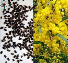 Buy yellow flower trees and get free shipping on aliexpress 20pcs golden mimosa acacia baileyana yellow wattle plant mightylinksfo