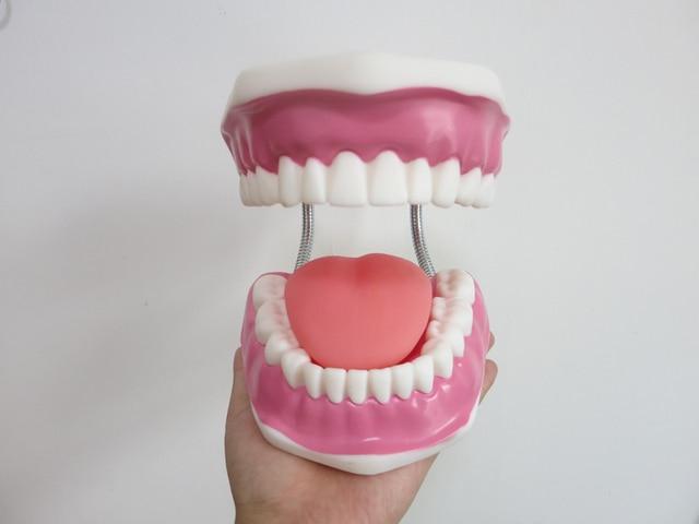 באיכות גבוהה 6 פעמים גדול שיניים דגם שיניים דגם מיוחד קישוט רופא שיניים מרפאת אישית דקורטיבי צלמיות