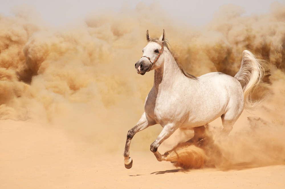 Обои Лошади Бесплатно