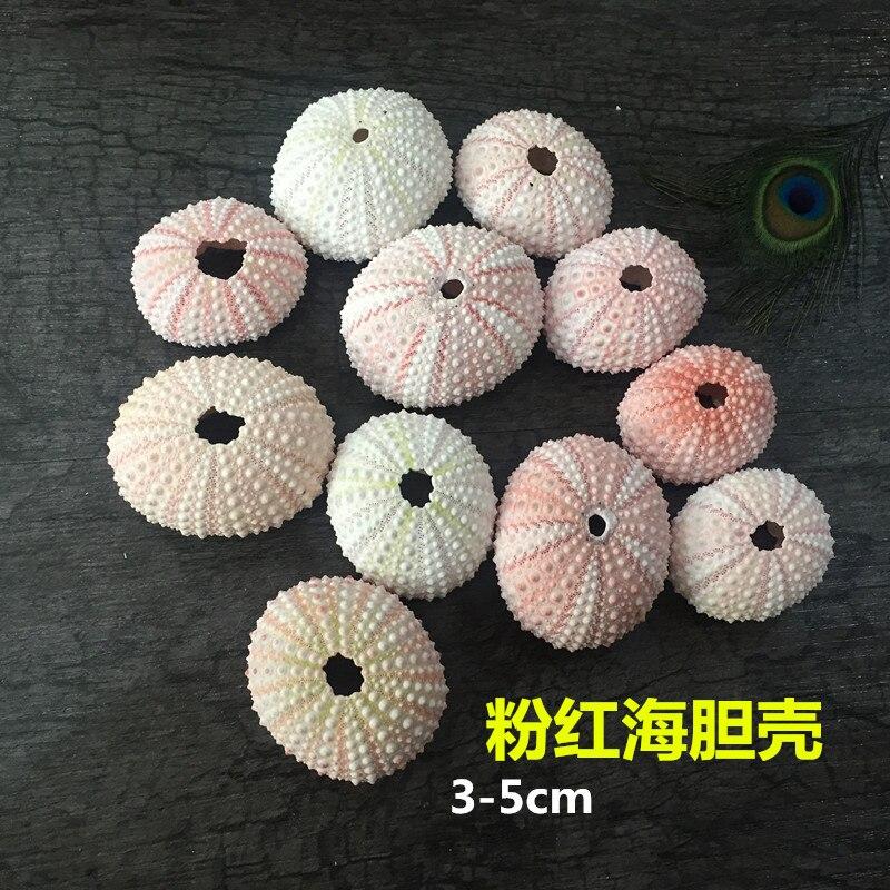 HappyKiss Natural  2pcs  Sea  Urchin  Star Fish Natural Mini Sea Urchins DIY Sea Shells  Small  Pink Sea Shells Weddings