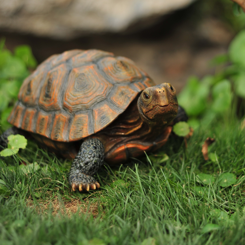 S/M/L Home Garden Ornament Outdoor Yard Garden Tortoise Art Resin Turtle Animal Figurine Statues Decoration Decor