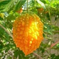 Hot selling Small wrasse melon Seeds, Original Package 8 grains Rare Cute Vegetable Balsampear Seeds