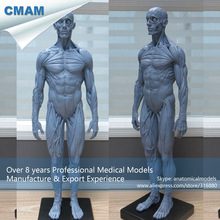 CMAM-PRC48 Mini Gray Human Full Body Muscle Anatomical Manikin Model