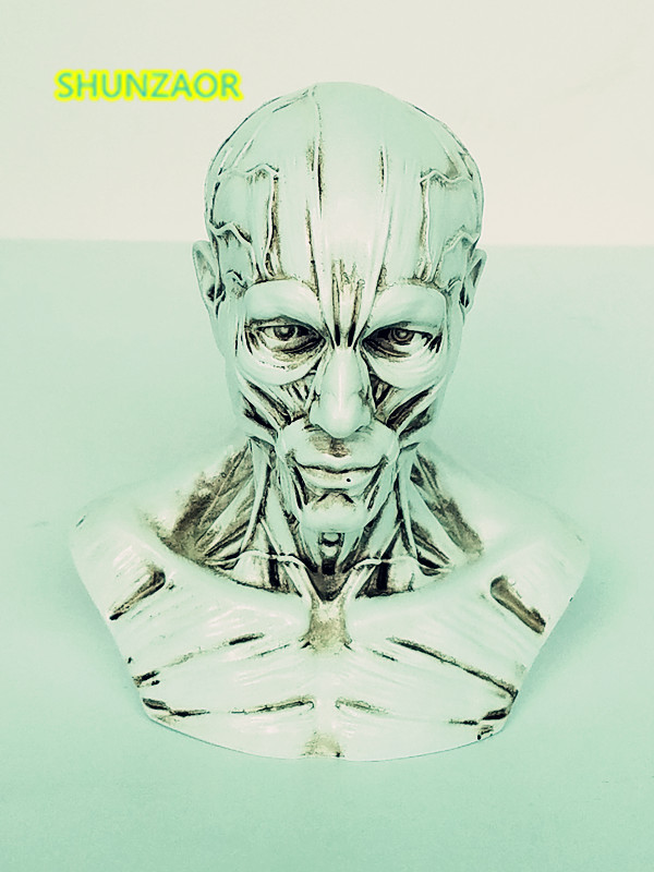 1:3 esqueleto humano esqueleto modelo anatómico para la venta cráneo ...