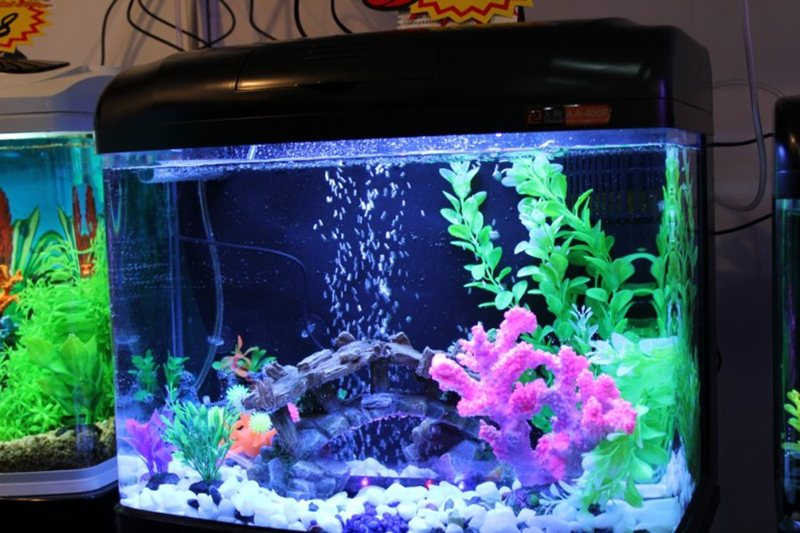beautiful aquarium decorations images galleries with a bite. Black Bedroom Furniture Sets. Home Design Ideas