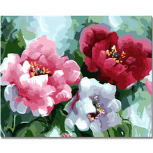 WEENThree peony flowers-Abstract Painting By Numbers kit, Modern Wall Picture For Home Artwork,Digital Paint By Numbers 40x50cm(China)