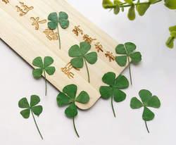 120 sztuk koniczyny barwnik zielony kolor suszone wtopiony kwiat liście na szklana dekoracja bezpłatna przesyłka
