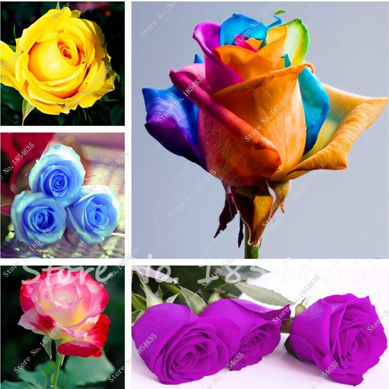 livraison gratuite pcs rose graines exotiques rares graines chinois rose graines de fleurs semenatsvety