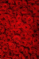 polyster photography backdrops red rose blossom wall photo backdrop for loving portrait studio photography background F 1110 A