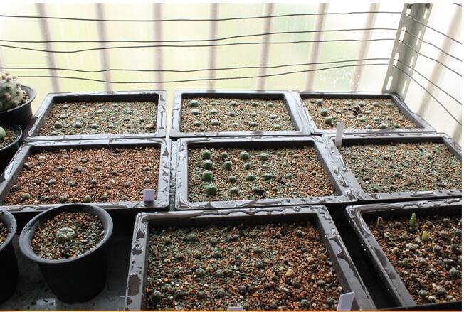 Envío gratis, 10pc / lot, rectángulo de plástico Plantando plantas - Productos de jardín