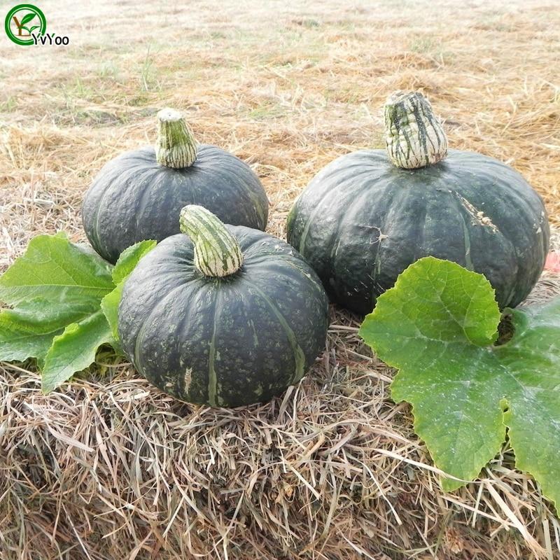 Pumpkin Seeds Bonsai Vegetable Squash Seeds 20pcs Honey Bear Garden  Decoration Plant A29(China (