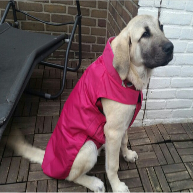 High quality winter warm large dog coat windproof dog