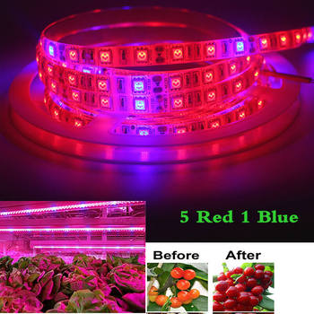 LED Growing Strip 5M/300 LED Plant Phyto Grow light Waterproof Flower Red Blue DC12V Full Spectrum Tape Hydroponic Grow Tent Box 5m led grow light strip full spectrum uv lamps for plants waterproof phyto lamp red bluetape for greenhouse grow tent hydroponic
