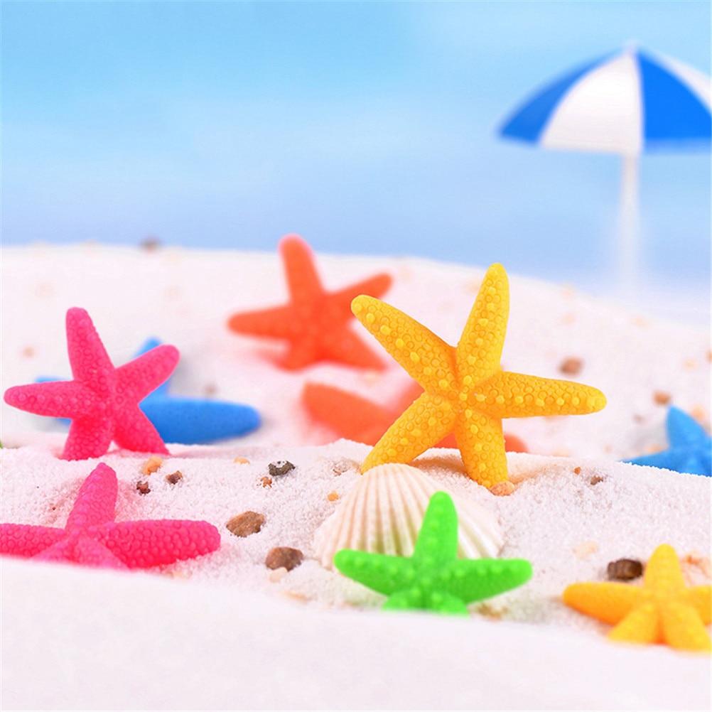 Lote de 6 unidades de conchas naturales de conchas, artesanías naturales, estrella de mar, estrella de mar Natural, estrella de mar seca DIY, decoración estilo mediterránea