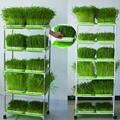 Sproteador berçário bandeja de dupla camada de feijão de cultura de soilless hidropônico berçário bandeja de mudas hidroponia suprimentos de jardim