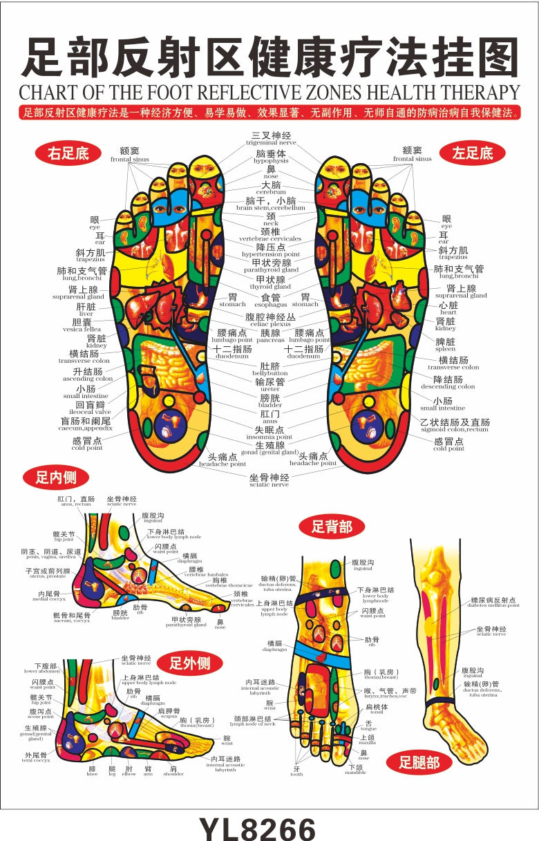 Online Buy Wholesale reflexology foot chart from China reflexology ...