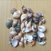 HappyKiss Lot Of Funny Mixed Sea Shells Shell Craft Aquarium Nautical Decor Ornaments mini conch party  natural mediterranean