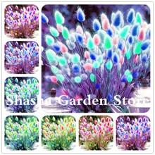 Bonsai 2019 New 200 pcs/pack Blue Tails Grass perennial hardy ornamental beautiful grass flower pot planters Easy to Grow