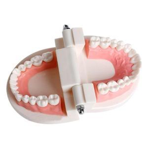Image 4 - Pro Dental Studie Lehre Weiß Zähne Modell Standard Karies Zahn Pflege Oral Medizinische Bildung Zahnarzt Ausrüstung Mundpflege Werkzeug