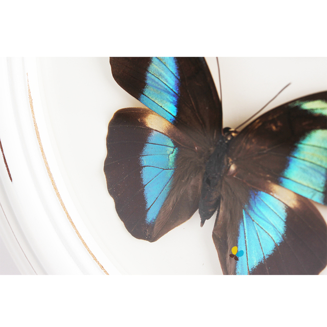 Y065E 001 Framed real butterfly insects shadow box table decorations ...