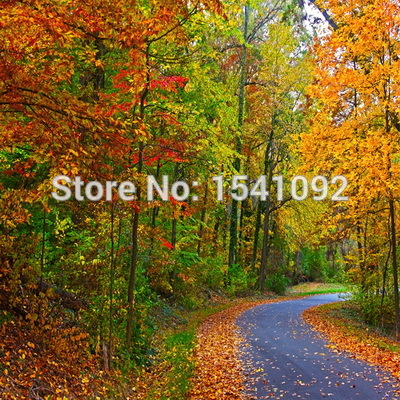 10x10ft Customize free shipping Thin vinyl cloth photography backdrop scenery computer Printing background for photo studio f176