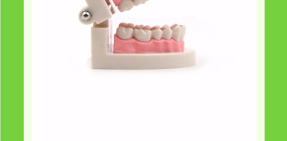 Teeth Model0000006